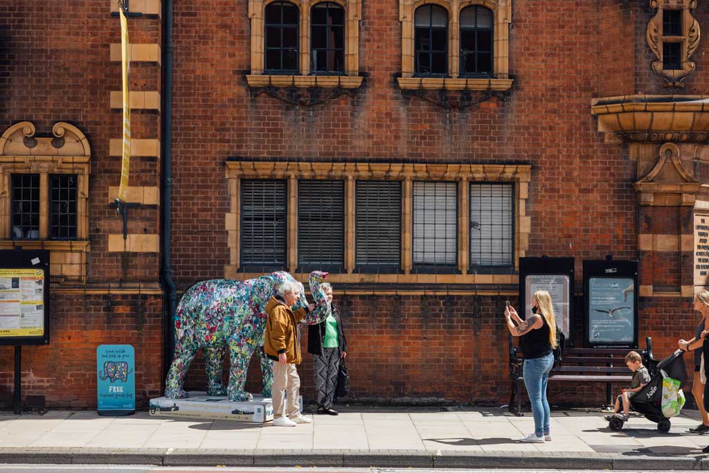 Jackson the elephant